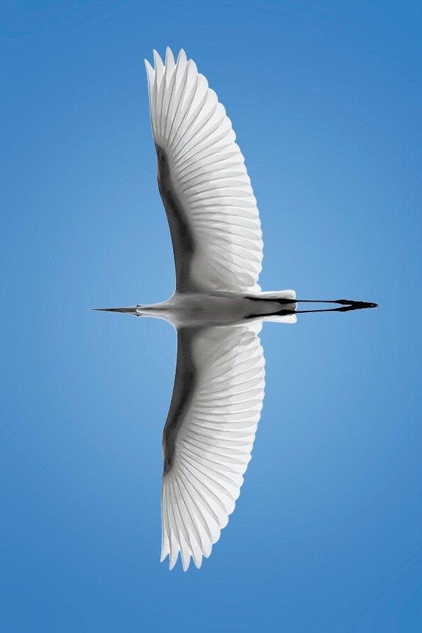 bird-winds-soar-blue-sky