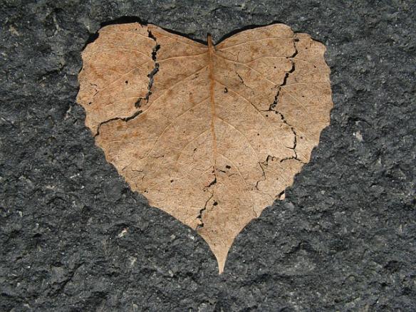 heart-742712_640